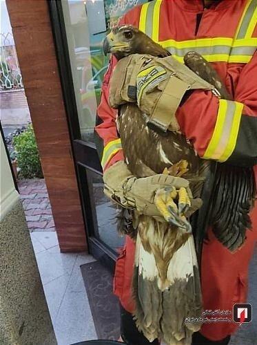 خدمات آتش نشانی ، آتش نشانی تهران ، حفاظت از محیط زیست ،