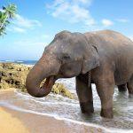 به سونوگرافی فیل آسیایی مراجعه کنید |  آخرین خبرها