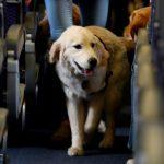 خوک را در خانه بگذارید: شرکت های هواپیمایی ایالات متحده نسبت به حیوانات پرواز سخت تر می شوند |  اخبار اقتصادی